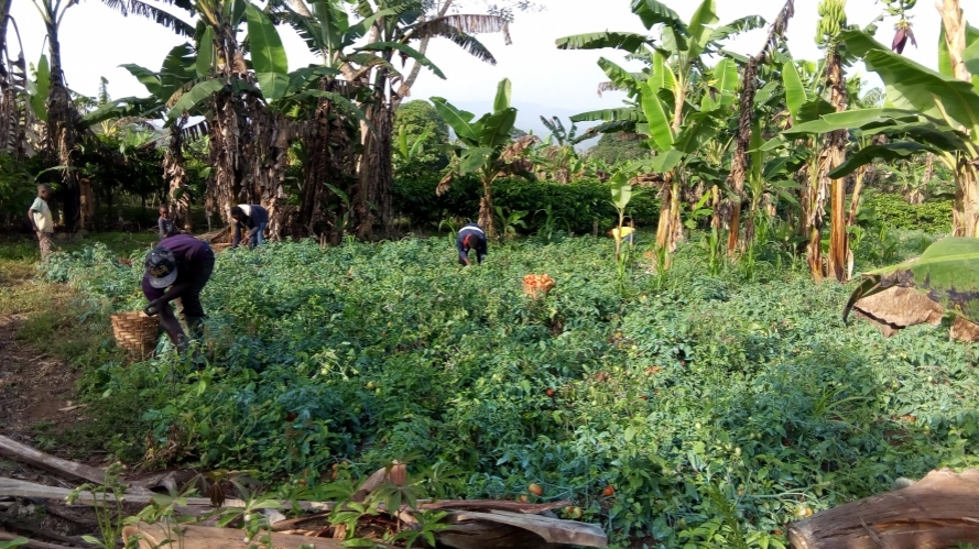 Empower Poor landless Farmers Through Organic Vegetable Production